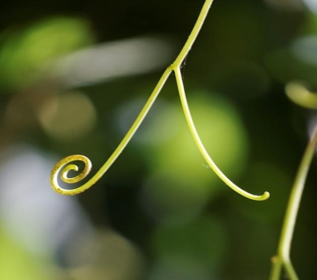 Dame Nature dessinant un kanji Aï, harmonie