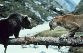 Descends si t'es un ours!L'ours de Jean-Jacques Annaud