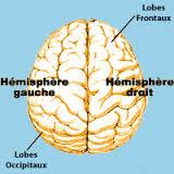 Les hémisphères vu du dessus